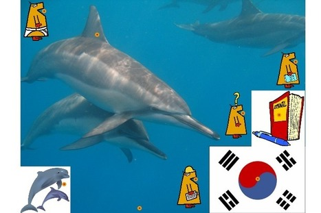 Dolphins Try To Save Dying Dolphin   Jabberites   The interactive Classroom   Scoop.it