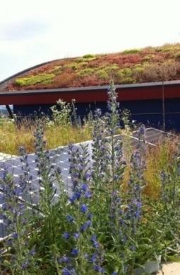 Des toits végétalisés pour favoriser le retour de la biodiversité en ville | Monde Agricole | Scoop.it