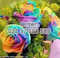 Jual Mawar Rainbow Import Untuk Rangkaian Istimewa | Toko Bunga | Scoop.it