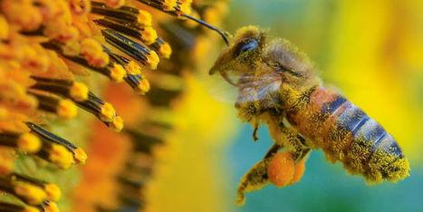 La nature subviendra de plus en plus difficilement aux besoins humains | Ca m'interpelle... | Scoop.it