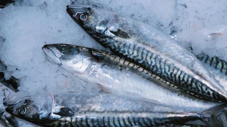 Alimentation : manger trop de poisson, c'est mauvais pour la santé ? - Sciences - MYTF1News   Alim attention   Scoop.it