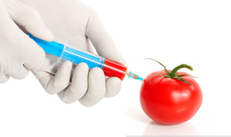 The Lies Behind Genetically Modified Organism (GMO) | Going Green | Scoop.it