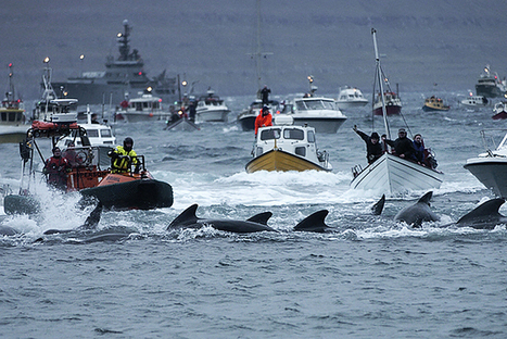 Sea Shepherd to Deploy Drones to Stop Massive Whale Slaughter | China & Investment | Scoop.it