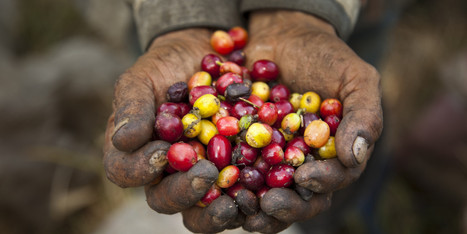 10 Reasons Fair-Trade Coffee Doesn't Work | Fair trade | Scoop.it