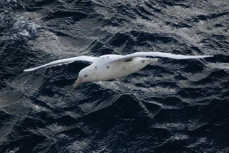 Scientists Now Know Why Some Seabirds Eat So Much Plastic   Plastic Pollution   Scoop.it