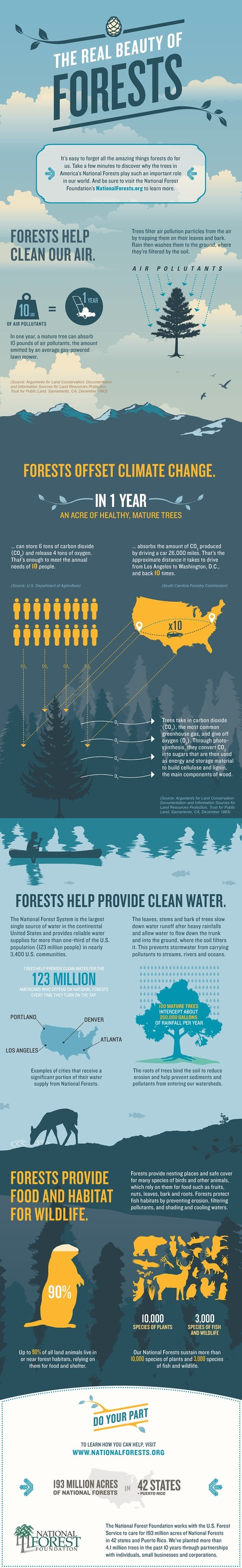 The Real Beauty of Forests - An Infographic from the National Forest Foundation | JOIN SCOOP.IT AND FOLLOW ME ON SCOOP.IT | Scoop.it