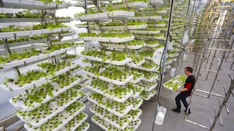 This Farm of the Future Uses No Soil and 95% Less Water | Societal Resilience, Foodproduction, Mobility, Living, Logistics, Infrastructure | Scoop.it