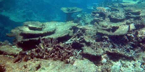 Australie : la Grande Barrière de corail pourrait disparaître | Biodiversité | Scoop.it