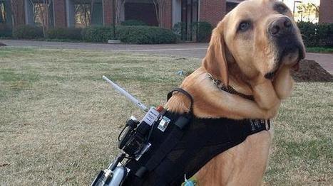 Un arnés tecnológico mejora la comunicación entre un perro y su amo | GeekNautas | Scoop.it
