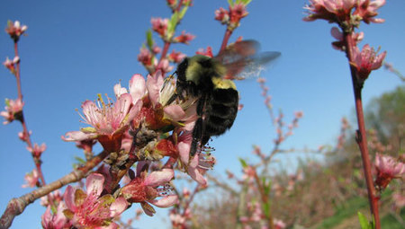 Why you should be more worried about pollination than a bee sting - Mother Nature Network | Simple, sustainable living. | Scoop.it
