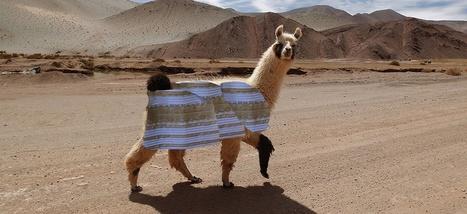 Pourquoi les médias ont eu raison de couvrir l'histoire de la robe et des lamas | Les médias face à leur destin | Scoop.it