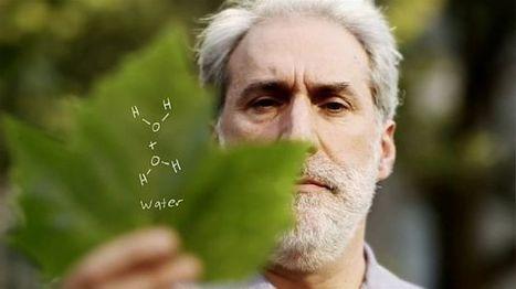 Chemist Hopes 'Artificial Leaf' Can Power Civilization Using Photosynthesis | Opportunités à MT | Scoop.it