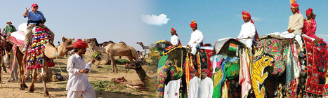 Best Tour Operators in Rajasthan | Local SEO Company | Scoop.it