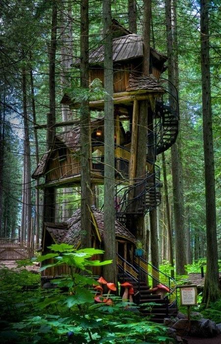 Three Story Tree House, British Columbia, Canada   BEATIFUL   Scoop.it