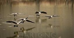Hartong Digital Media llc : Better Canon DSLR Focus   Digital Photography 101   Scoop.it