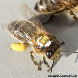 Pesticides hit queen bee numbers | The Glory of the Garden | Scoop.it