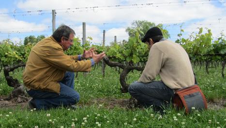 Uruguay, Bodega Pisano | South American Wines Online | Scoop.it
