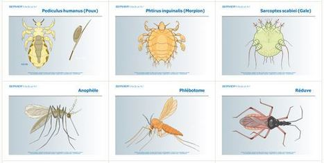 3 000 illustrations médicales libres | Insect Archive | Scoop.it