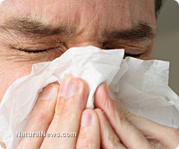 Simple home remedies for hayfever and allergies - Natural News | Asthma & Allergies | Scoop.it