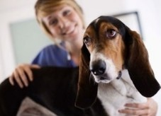 How your dog could be a blood donor | Pet Health | Embrace Life | Best Health | Radio Show Contents | Scoop.it