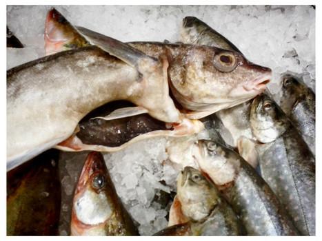 Fiskdisken på Coop on Twitpic @kajsahartig | aquarium | Scoop.it