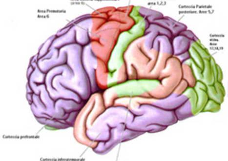Varese, un'eccellenza psichiatrica - VareseNews | psicologia cognitiva | Scoop.it