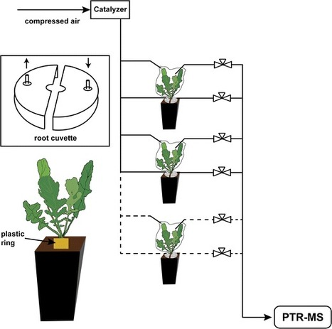 Aboveground and Belowground Herbivores Synergistically Induce Volatile Organic Sulfur Compound Emissions from Shoots but Not from Roots | Interaction, and more... | Scoop.it