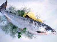 An Entrepreneur Bankrolls a Genetically Engineered Salmon - CNBC.com | Vertical Farm - Food Factory | Scoop.it
