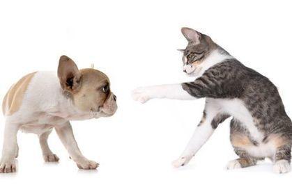 Soigner les vers chez le chien et le chat | Actualités de l'assurance | Scoop.it