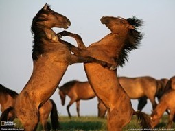What Role do YOU Play? | Holistic Horses from PENZANCE Equine Integrative Solutions | Scoop.it