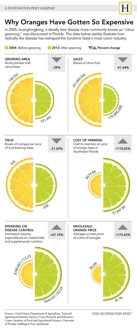 GMO Oranges Come One Step Closer To Market   Food issues   Scoop.it