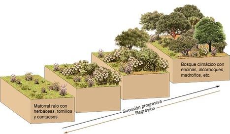 Las sucesiones ecológicas | Cambios Ambientales: Escalas y Procesos | Scoop.it