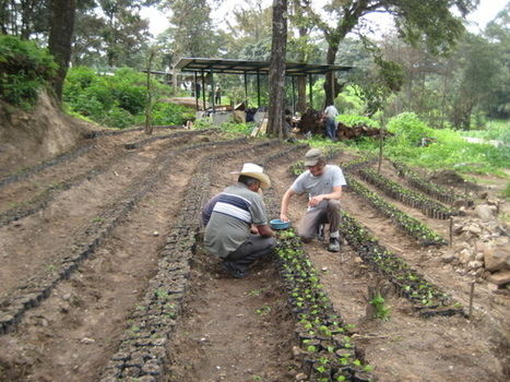 From Food Security to Food Sovereignty | Agriculture and Farming | Scoop.it