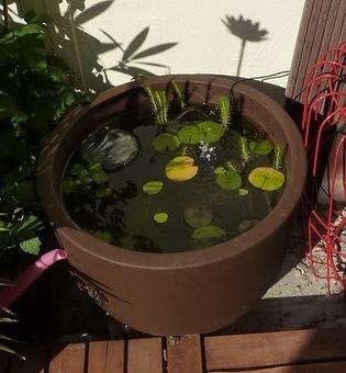 DIY : fabriquer un mini bassin aquatique! | Best of coin des bricoleurs | Scoop.it