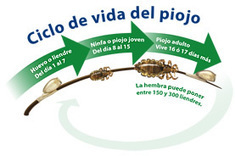 Consejos para prevenir los piojos durante el verano - Blog de ...   piojos   Scoop.it