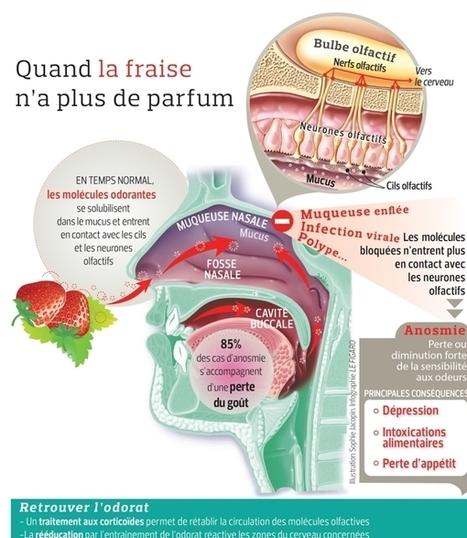 Vivre sans odorat, un handicap fréquent | Les actualités du groupe Traces et de l'Espace des sciences Pierre-Gilles de Gennes de l'ESPCI ParisTech | Scoop.it