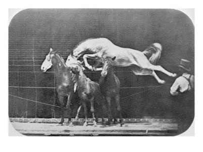 Jumping over three horses...chestnut horse Hornet, from 'Animal Locomotion, An Electro-Photographic Investigation of Consecutive Phases of Animal Movement', c.1872-85 (b/w photo by: Muybridge, Eadw...   Equine Photography   Scoop.it