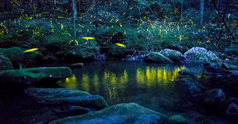 How fireflies are beautiful — and useful | Daily News Reads | Scoop.it