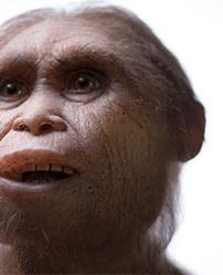 Homo floresiensis, un petit ancêtre de 700 000 ans ! | Aux origines | Scoop.it
