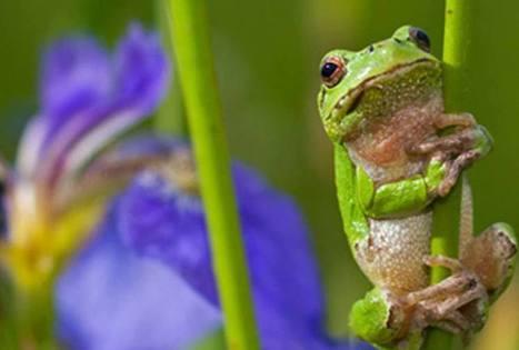 UP Magazine - Emplois de la biodiversité: les régions peuvent changer la donne | 2025, 2030, 2050 | Scoop.it