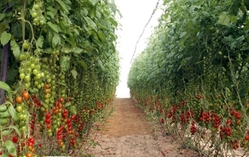 UAE: New farming methods give local crops a boost in Abu Dhabi - Global Arab Network - English News | Agricultural & Horticultural Industry News | Scoop.it