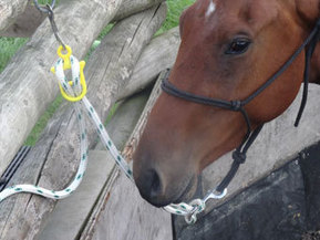 Tie Up Training - Horsemanship Journal | Holistic Horses from PENZANCE Equine Integrative Solutions | Scoop.it