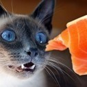 11 Famous Cat Myths | Cat Care And Fun | Scoop.it