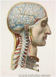 » 3 Fascinating Facts About Our Brilliant Brains - World of Psychology | EMDR | Scoop.it