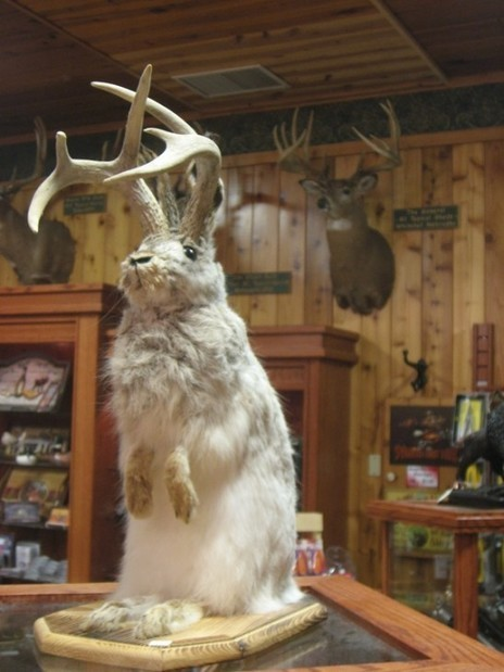The world's scariest rabbit lurks within the Smithsonian's collection - Smithsonian Science | Taxidermy anthropology | Scoop.it