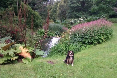 Dog Friendly Days Out and Holidays | Plan a Dog Friendly Holiday | Scoop.it