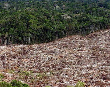 18 mayo 2011 21:10:00 Amazonía Brasileñana. La deforestación se multiplica por cinco / Noticias / Contenidos / Inicio - EFE Verde   LA DESFORESTACION DE ARBOLES   Scoop.it