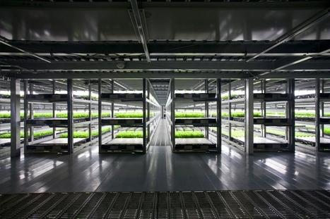 Une ferme entièrement automatisée - Au Japon, les cultivateurs se font remplacer par des robots | Robotique et pme | Scoop.it