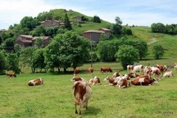 Conoce Auvernia en Francia | Opiniones de viajes contados por viajeros o profesionales | World Wine Stories | Scoop.it