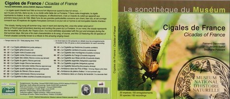 Naturophonia : Cigales de France | Insect Archive | Scoop.it